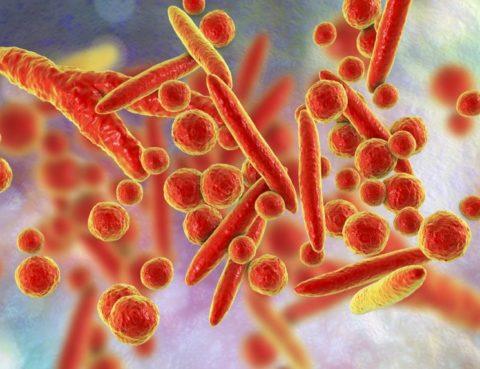 Mycoplasma Pneumoniae - ANALISI CATA CATANIA
